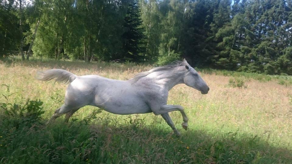 Hestevelfærd